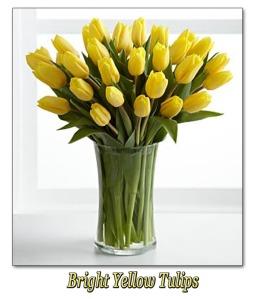 Bright Yellow Tulips