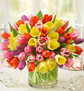 Spring flowers at allens flowers time for tulips allens there has never been a better time for tulips than during the spring sale at allens flowers and plants tulip2 mightylinksfo