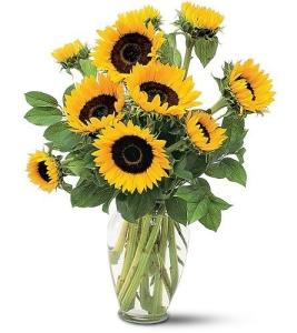 sunflowersa1