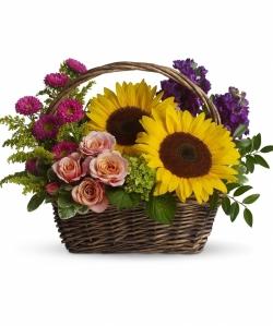 sunflowersa2