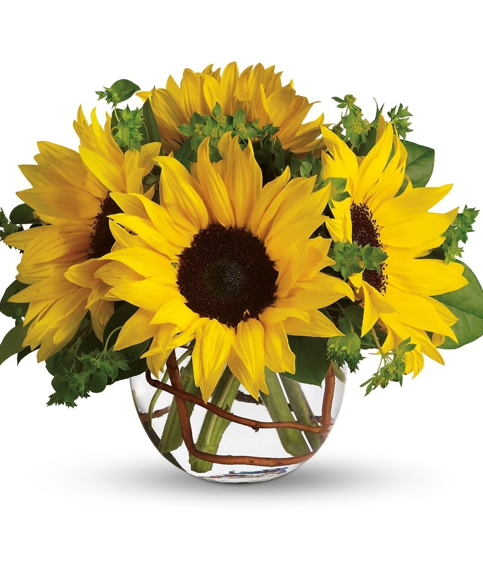 Sunflowers for A arrangement florist flowers